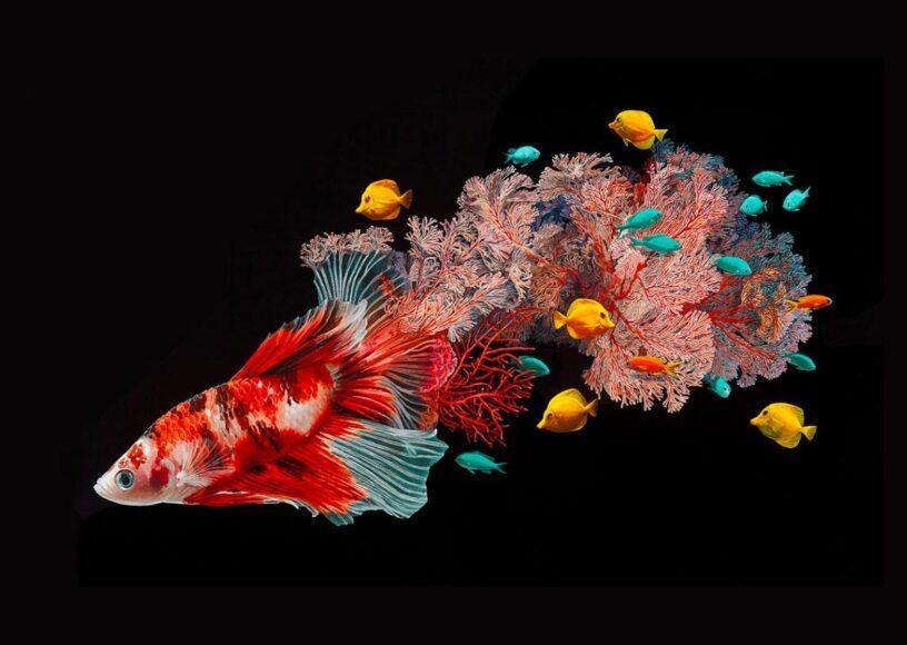 hình ảnh con cá đẹp nghệ thuật