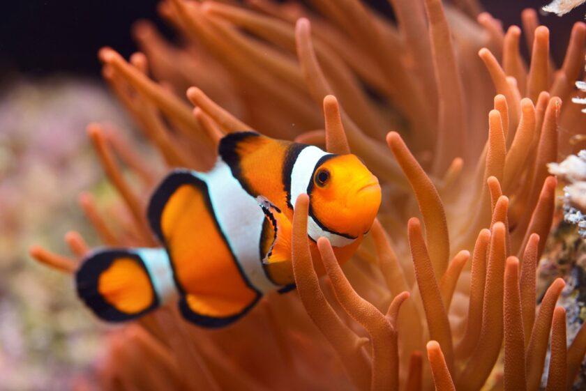 hình ảnh con cá đẹp rực rỡ