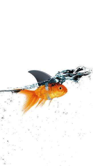 hình ảnh con cá đẹp tối giản