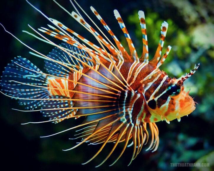 hình ảnh con cá đẹp tuyệt mỹ