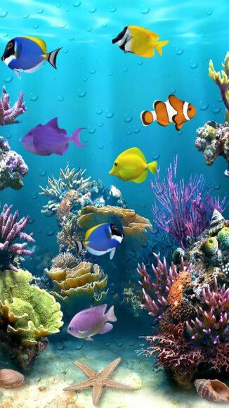 hình ảnh con cá dưới biển sâu