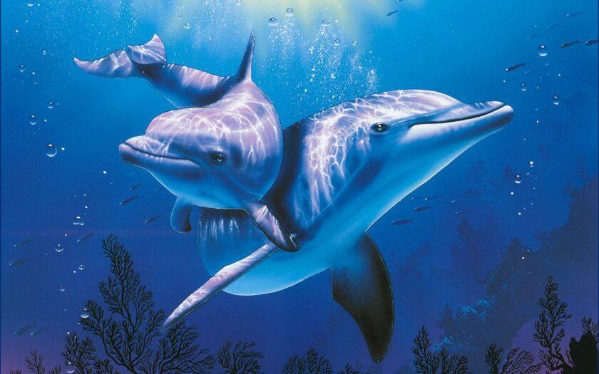 hình ảnh con cá heo đẹp
