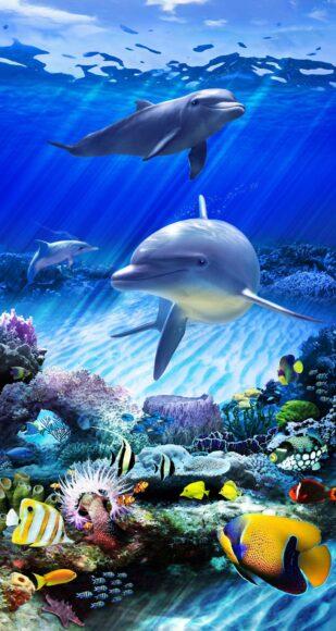 hình ảnh con cá heo dưới đại dương