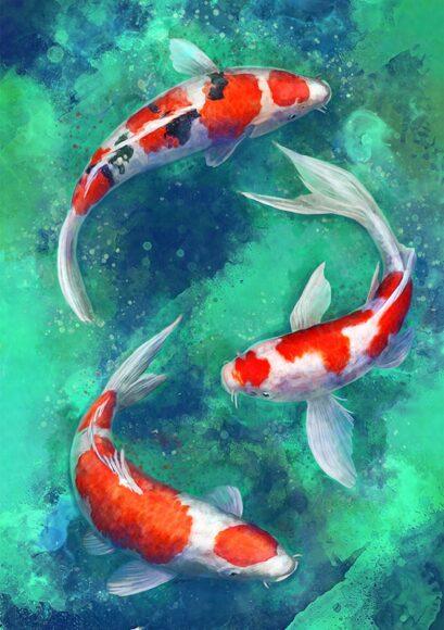 hình ảnh con cá koi đẹp nhất