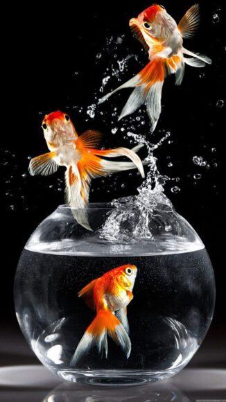 hình ảnh con cá nhảy ra khỏi bể đẹp