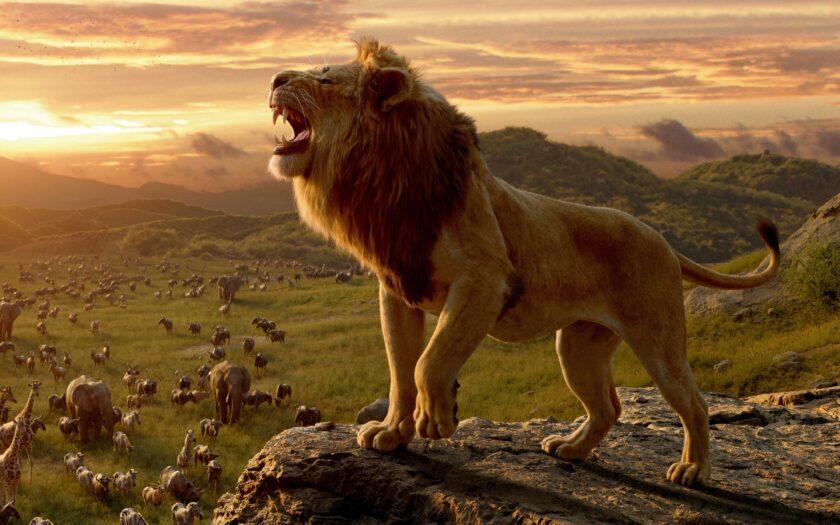 hình ảnh sư tử gầm