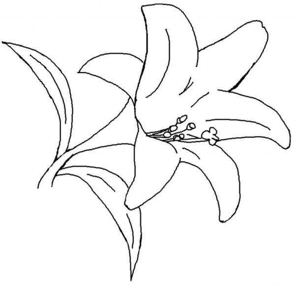Tranh tô màu bông hoa loa kèn dành cho bé 3 tuổi