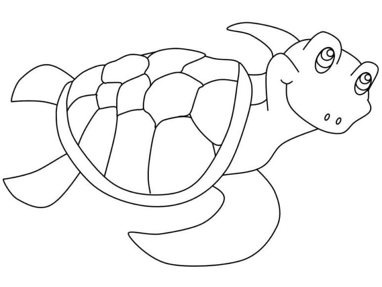 Tranh tô màu con rùa dành cho bé 3 tuổi