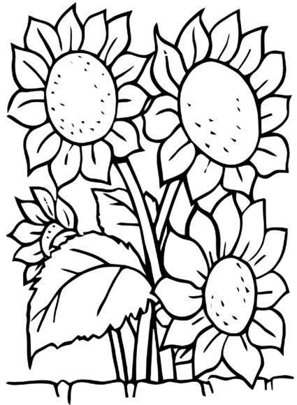 Hình vẽ đen trắng vườn hoa hướng dương