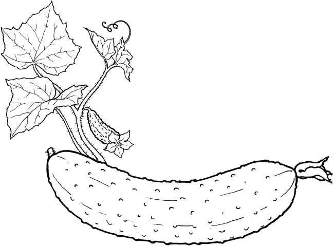 Tranh tô màu rau củ quả hình quả dưa chuột