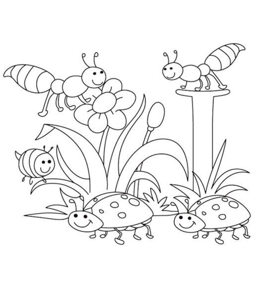 Tranh tô màu vườn hao và những con côn trùng