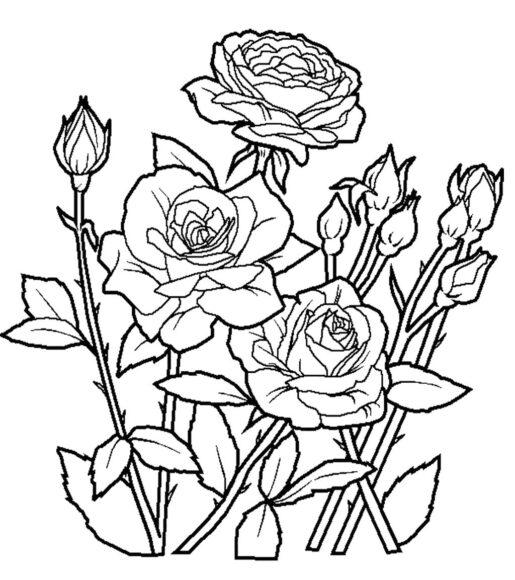 Tranh tô màu vườn hoa hồng