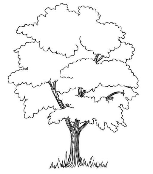 Tranh vẽ cây xanh cho bé tô màu