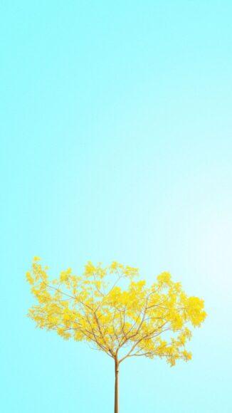 hình ảnh mùa xuân đẹp bình dị