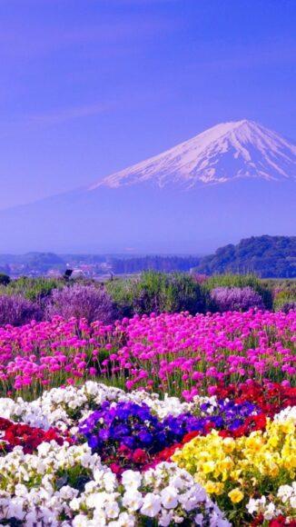 hình ảnh mùa xuân đẹp dưới chân núi