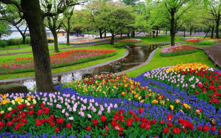 hình ảnh mùa xuân đẹp làm nền