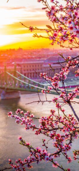 hình ảnh mùa xuân đẹp mộng mơ