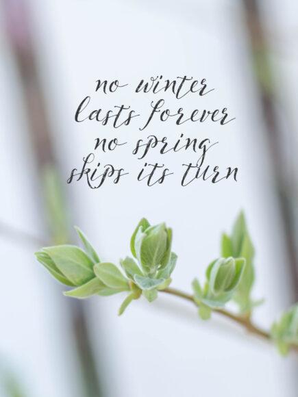 hình ảnh mùa xuân đẹp nhất và quote ý nghĩa