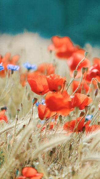 hình ảnh mùa xuân đẹp với các loại hoa