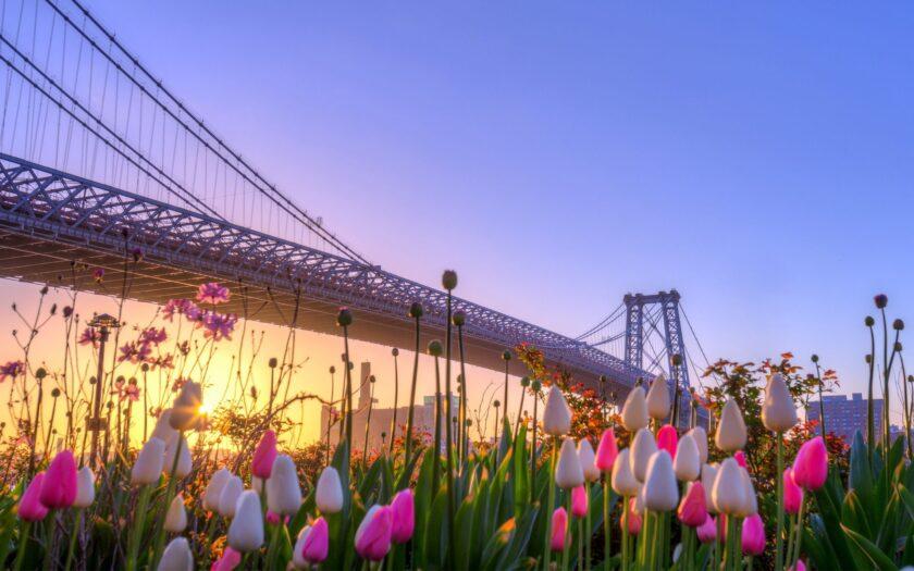 hình ảnh mùa xuân đẹp với hoa nở rộ