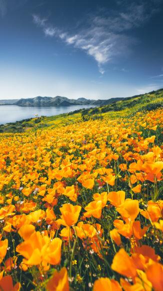 hình ảnh mùa xuân làm nền điện thoại