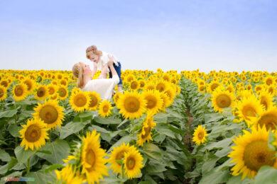 hình ảnh cánh đồng hoa hướng dương có mẹ và bé