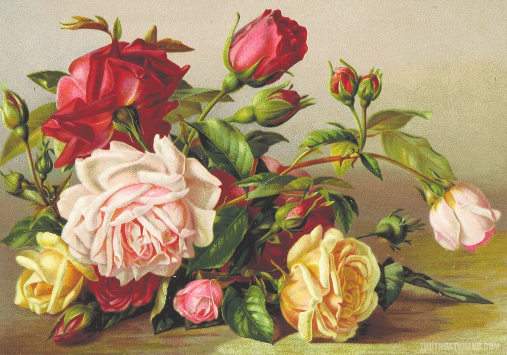 tranh vẽ hoa hồng các loại đẹp